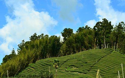 La tradición del té en Taiwán