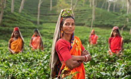 Té de la India: tradición, sabor y aroma