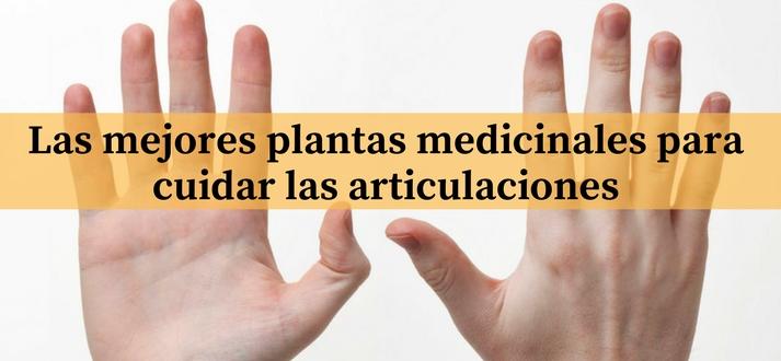 Las mejores plantas medicinales para cuidar las articulaciones