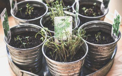 Plantas medicinales del mes de marzo: siembra y recolecta